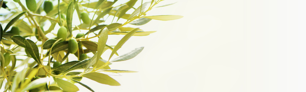 Comparing different Olive Leaf Extract products