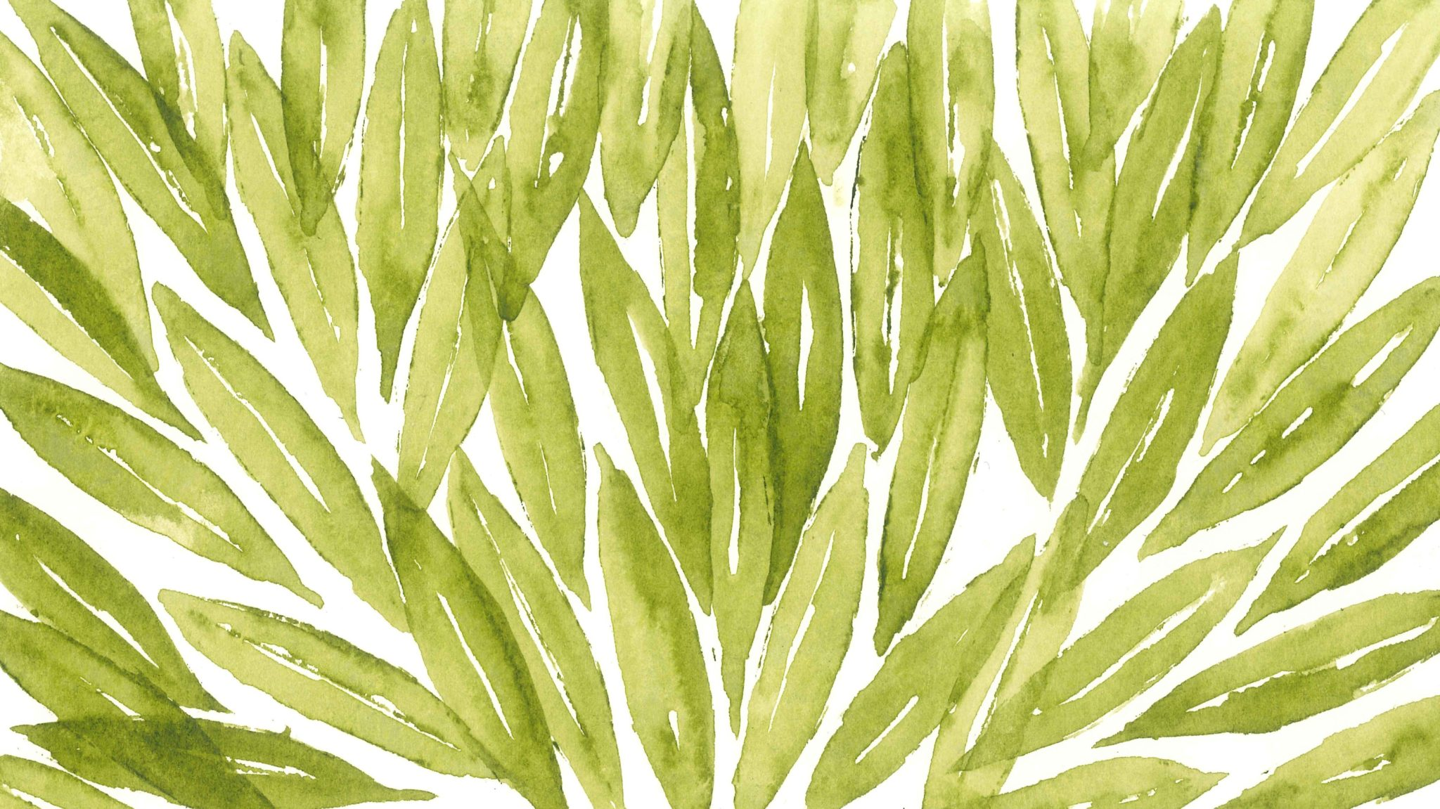 Olive leaf – not all extracts are created equal